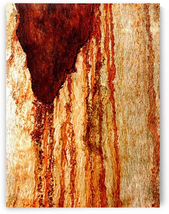 Murray Gum Tree Bark 7 by Lexa Harpell