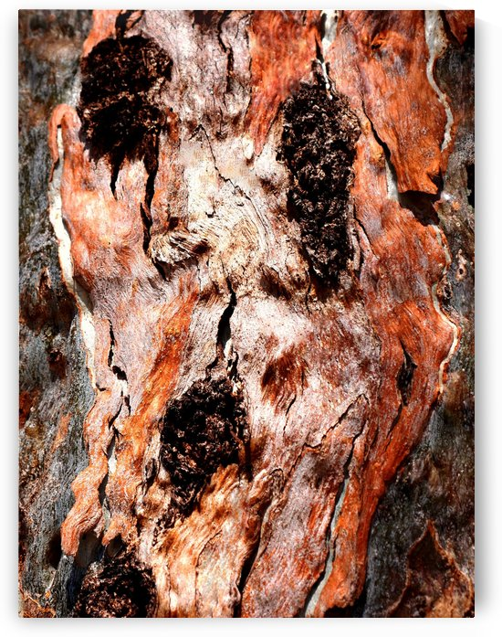 Murray Gum Tree Bark 9 by Lexa Harpell