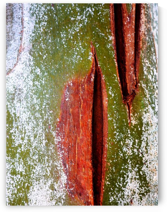Murray Gum Tree Bark 10 by Lexa Harpell
