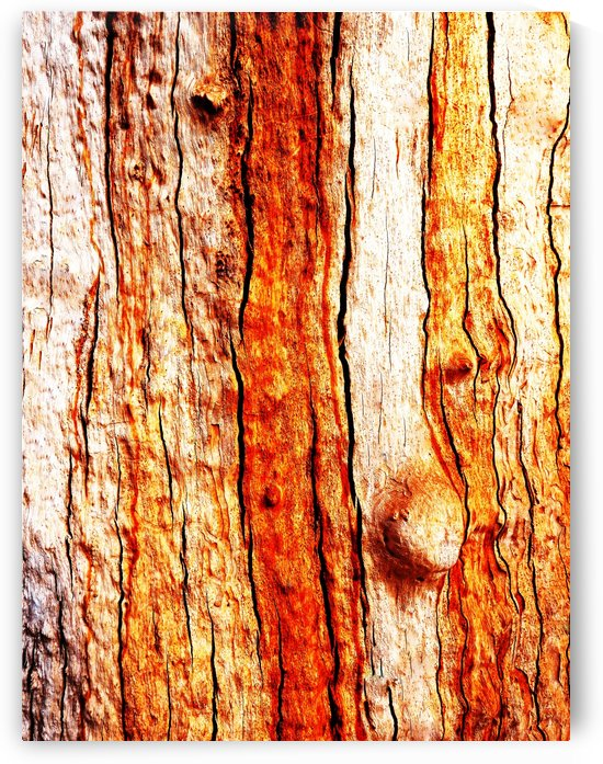 Murray Gum Tree Bark 12 by Lexa Harpell