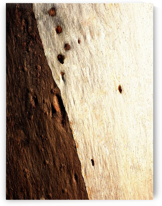 Murray Gum Tree Bark 15 by Lexa Harpell
