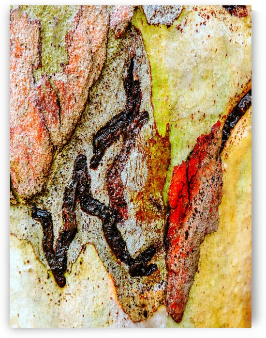 Aussie Gum Tree Bark - 9 by Lexa Harpell