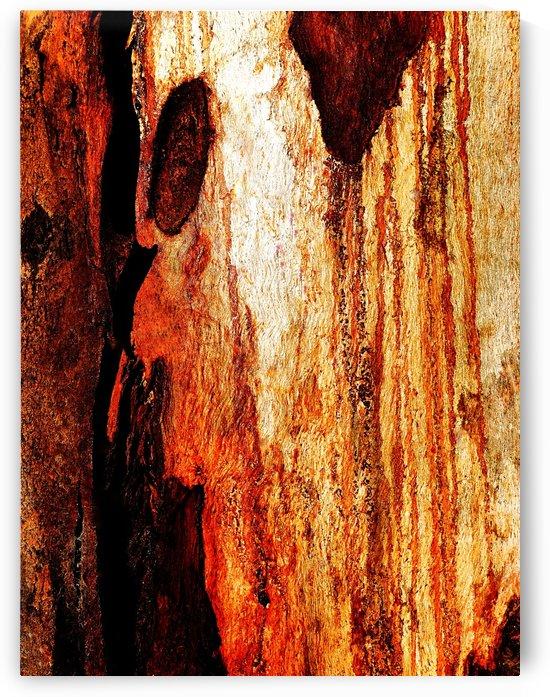 Murray Gum Tree Bark 16 by Lexa Harpell