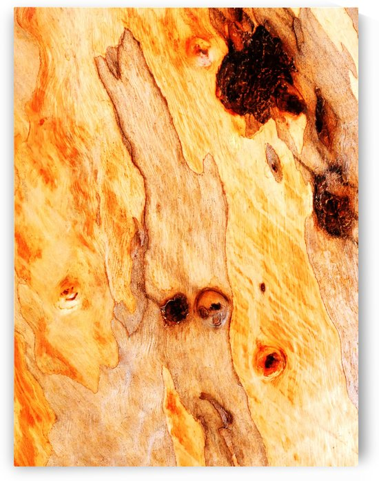 Aussie Gum Tree Bark - 16 by Lexa Harpell