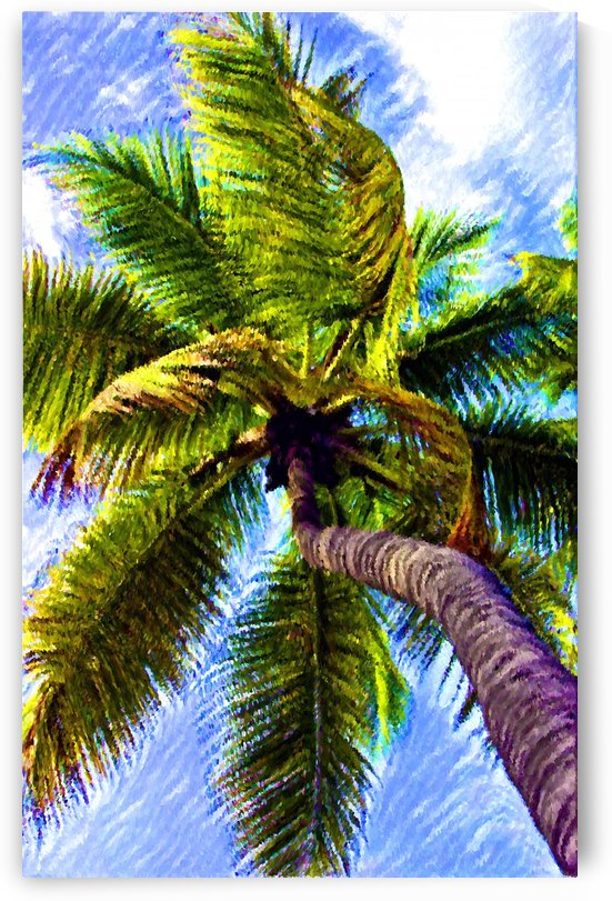 Tropical Palm by George Bloise