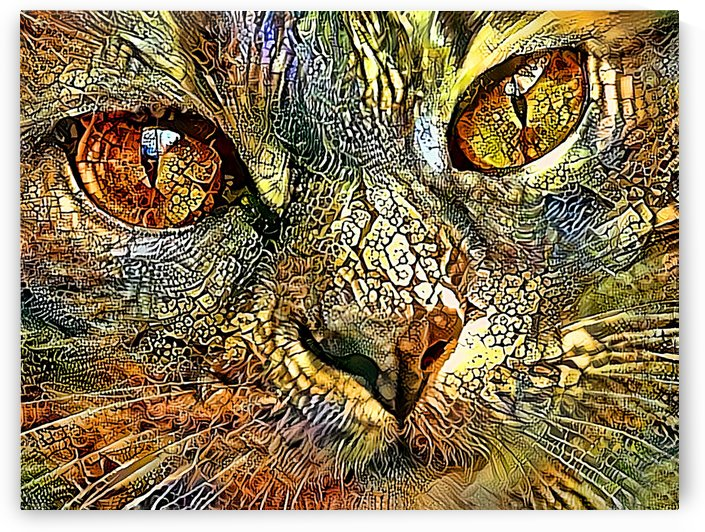 Cat Eyes by HH Photography of Florida