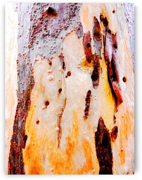 Aussie Gum Tree Bark - 21 by Lexa Harpell