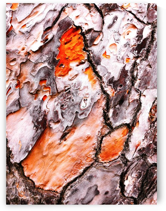 Pine Tree Bark 2 by Lexa Harpell