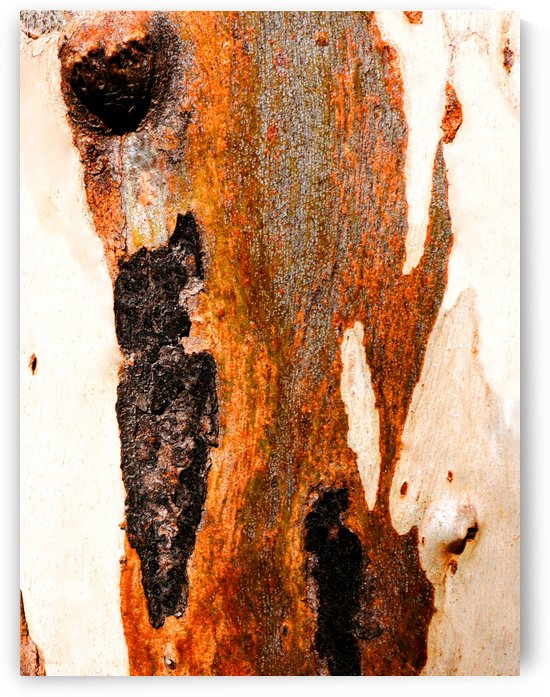 Aussie Gum Tree Bark - 23 by Lexa Harpell