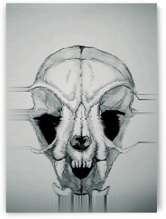 Domestic Cat Skull by Rabid Solutions