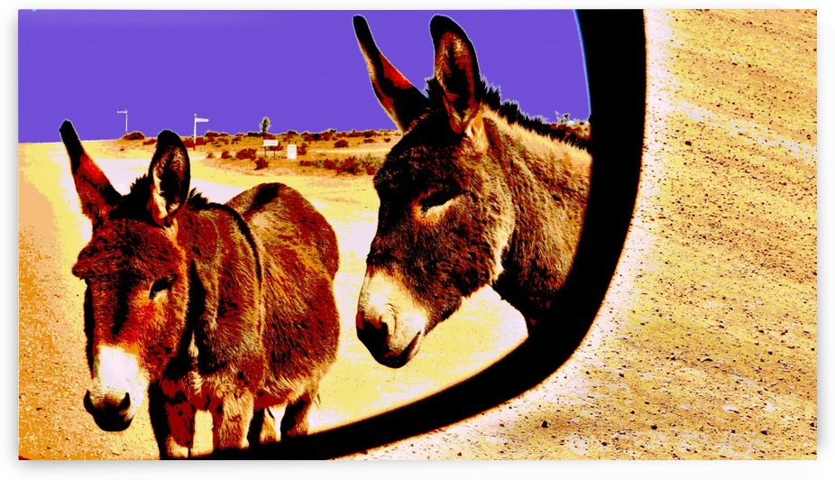 Donkeys of the Outback by Lexa Harpell