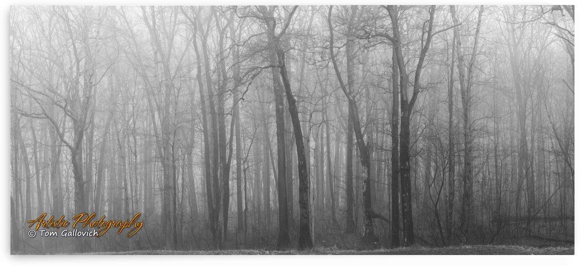 Treeline by Artistic Photography