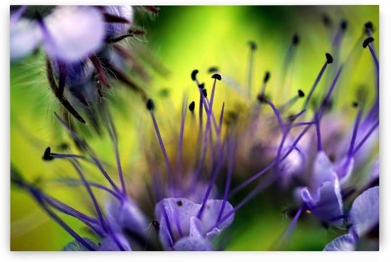 Abstract Pop Color Flower Photography 17 by Richard Vloemans Macro Photography