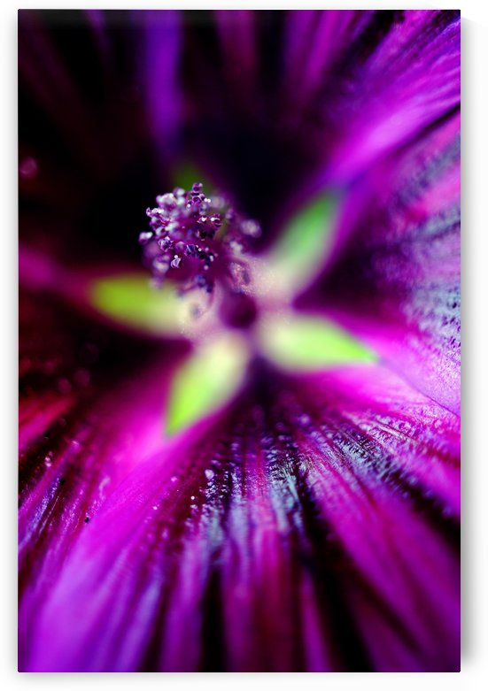 Abstract Pop Color Flower Photography 20 by Richard Vloemans Macro Photography
