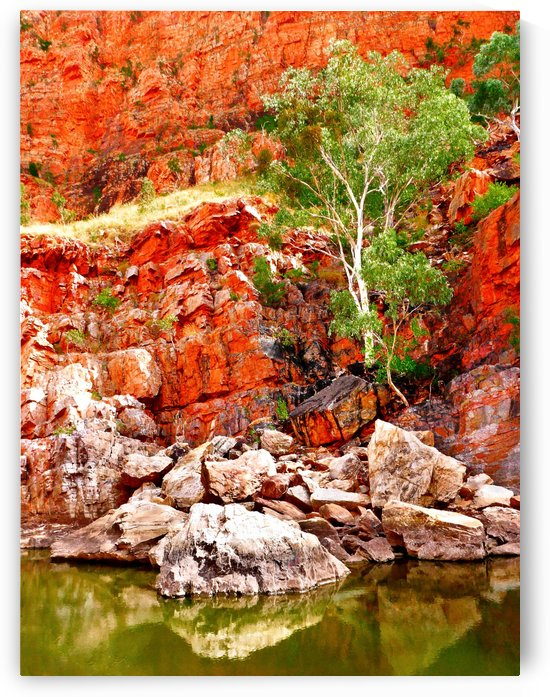 Life in the Gorge - Ormiston Gorge by Lexa Harpell