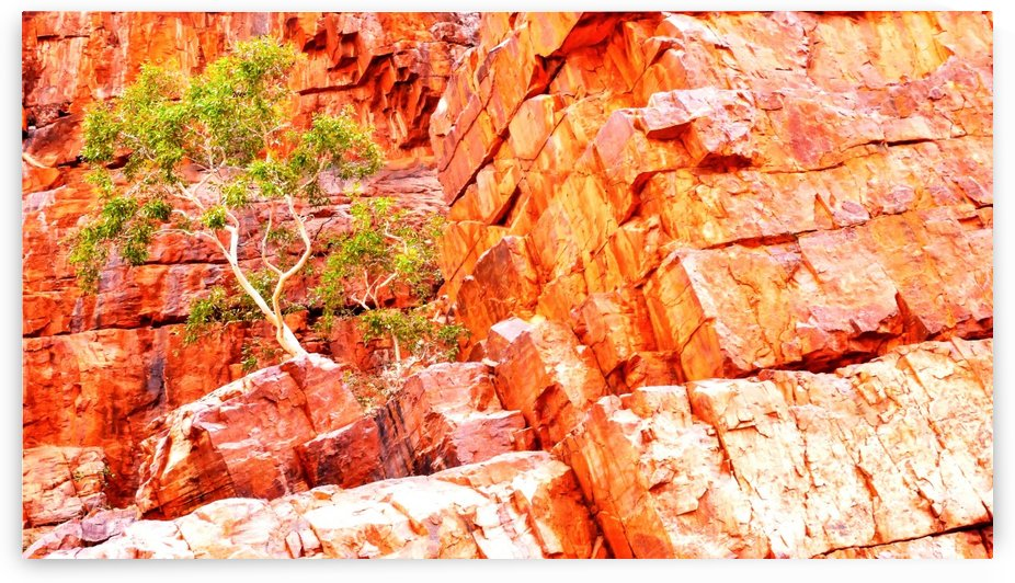 Pink Delight - Ormiston Gorge by Lexa Harpell