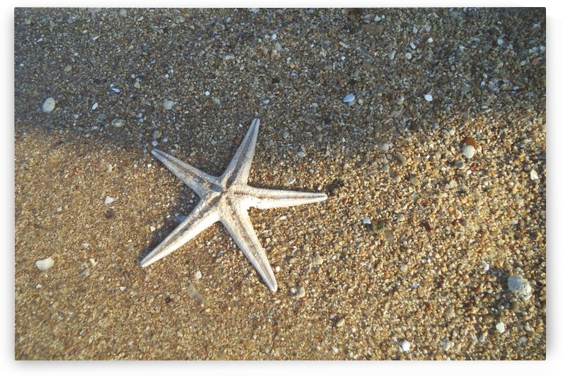 starfish PHOTOGRAPHY  by ANASTASIA SKARLATOUDI