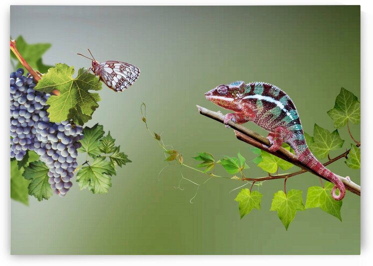 Butterfly and chameleon. Intrigue.  by Radiy