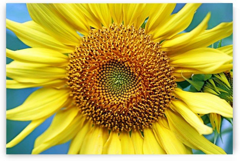 Sunshine In The Garden by Deb Oppermann