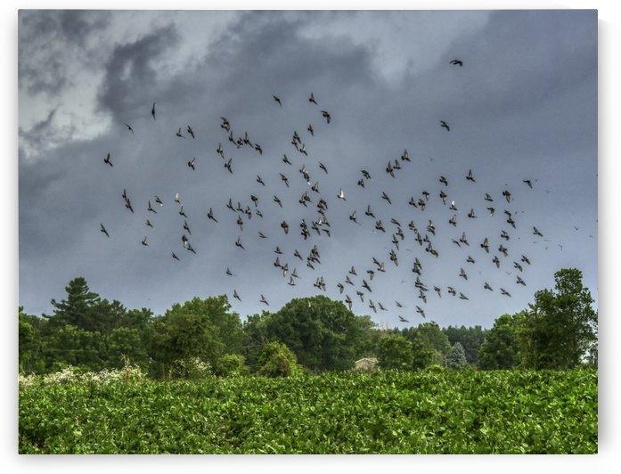 The Swarm by Joseph Scaglione III