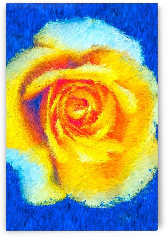 Floating Rose by Joy Watson
