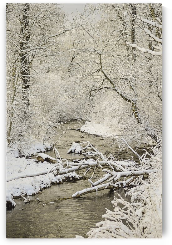 South Cottonwood Creek by Scene Again Images: Photography by Cliff Davis