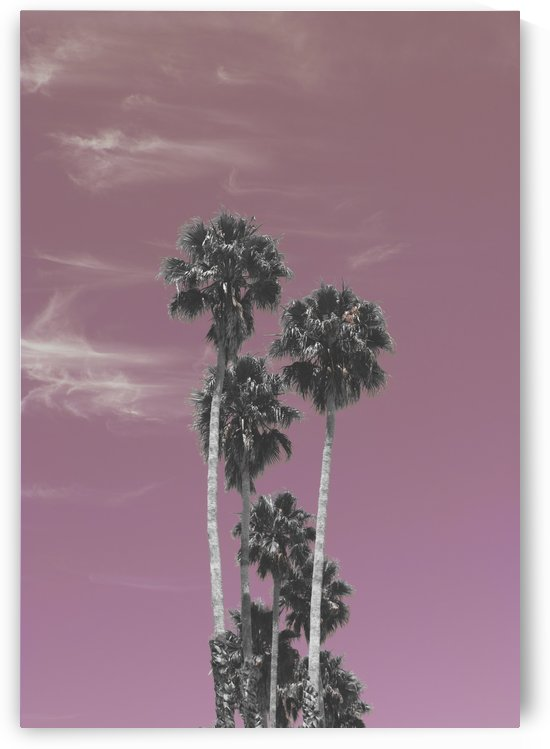 Palm trees in summer by Filipa Sara Popova
