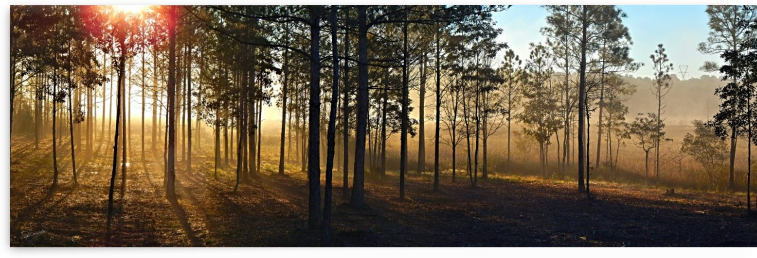 Winter Morning Bayou Panorama by Shadow and Form