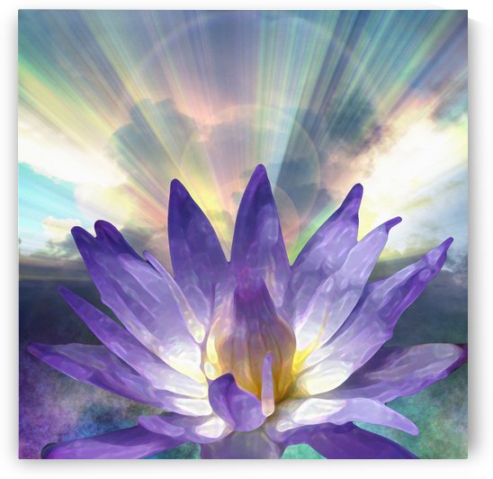 Purple Lotus by Bruce Rolff