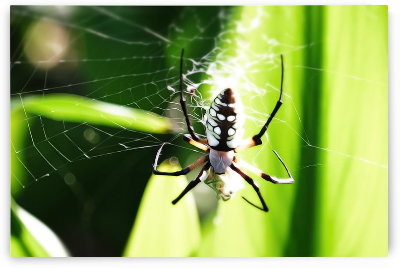 ZigZag Spider2 by Danielle Smallwood