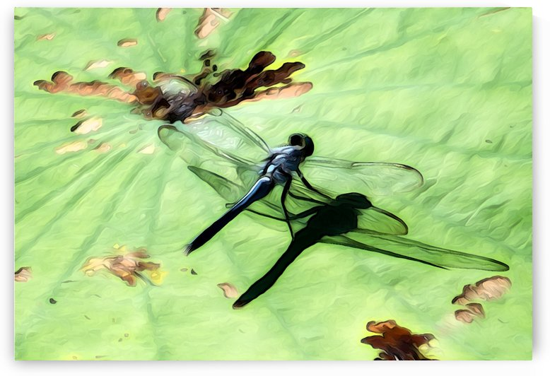 Dragon Fly by Danielle Smallwood