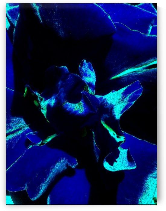 Art of the Blue Rose 2 by Jeremy Lyman