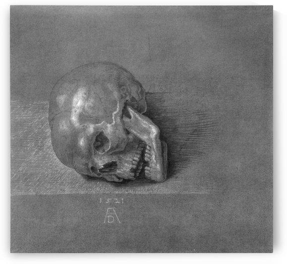 Skull by Albrecht Durer
