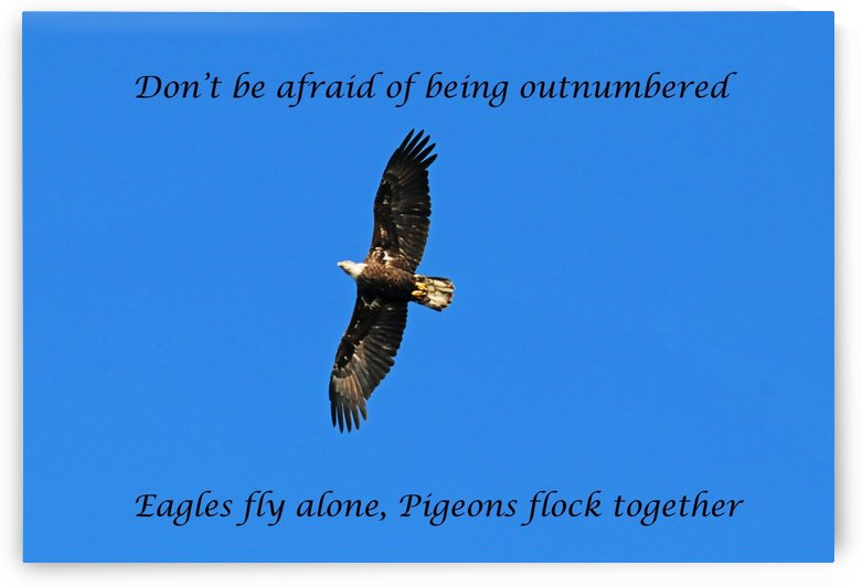 Fly Alone by Deb Oppermann