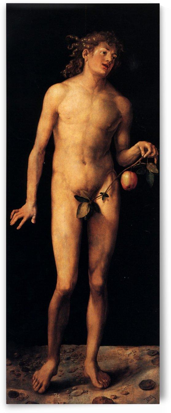 Adam by Albrecht Durer
