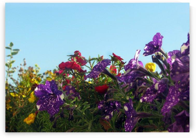 Balcony Flowers by Jaeda DeWalt