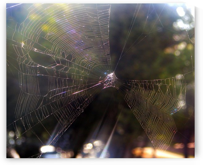 Spider Web by Jaeda DeWalt