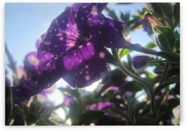 Starry Sky Flower 2 by Jaeda DeWalt