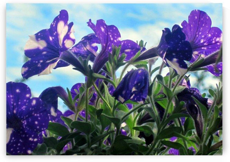 Starry Sky Flowers 4 by Jaeda DeWalt