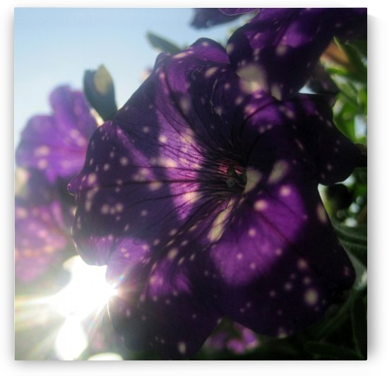 Starry Sky Flower 6 by Jaeda DeWalt