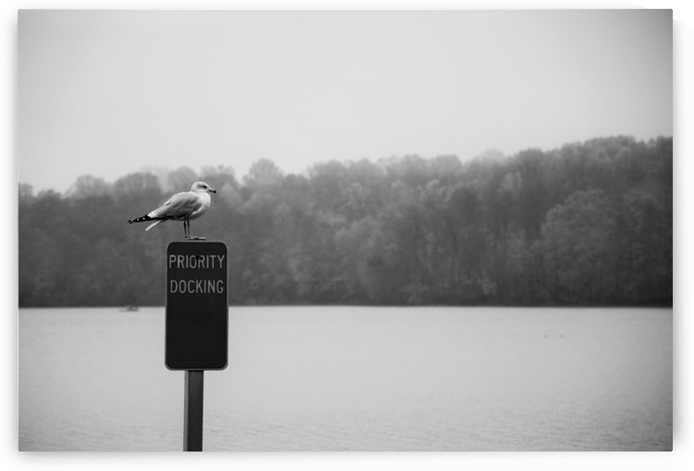 Seagull At The Lake Photograph by Katherine Lindsey Photography