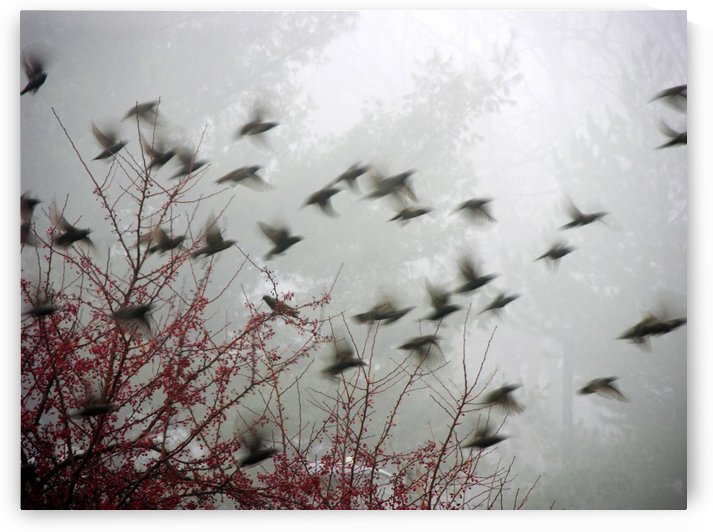 Birds In Flight Photograph by Katherine Lindsey Photography
