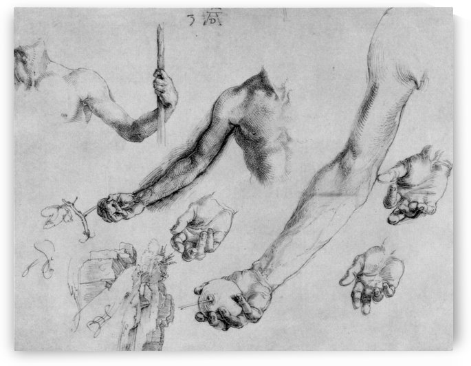 Study of male hands and arms by Albrecht Durer