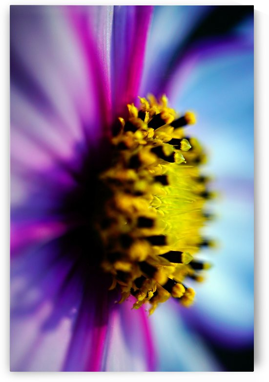 Abstract Pop Color Flower Photography 29 by Richard Vloemans Macro Photography
