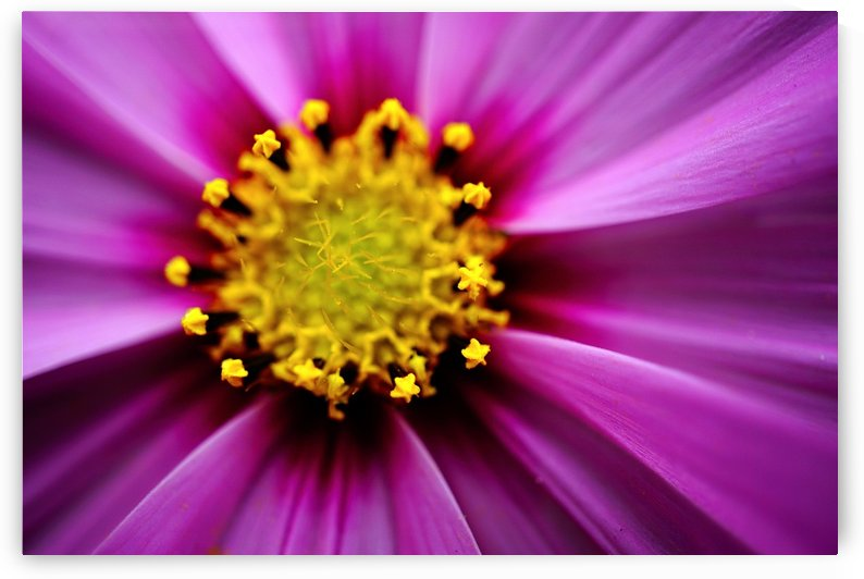 Abstract Pop Color Flower Photography 30 by Richard Vloemans Macro Photography