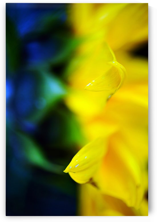 Sides of a Sunflower 04 by Richard Vloemans Macro Photography