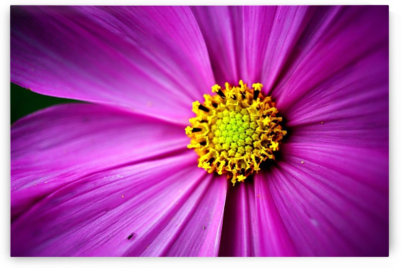 Abstract Pop Color Flower Photography 33 by Richard Vloemans Macro Photography