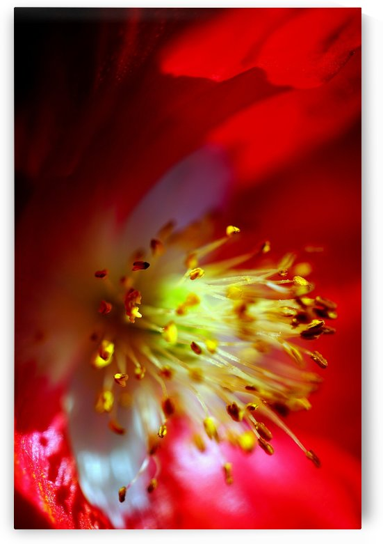 macro colorful pistils of a flower 03 by Richard Vloemans Macro Photography