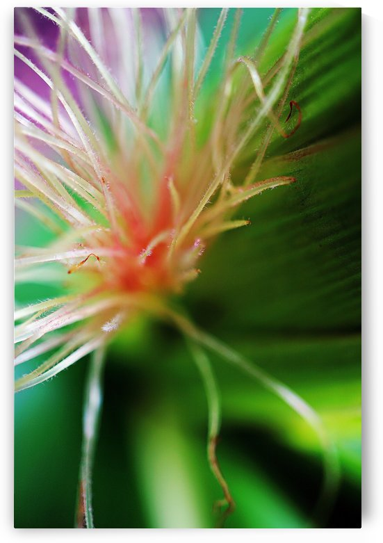 macro colorful pistils of a flower 04 by Richard Vloemans Macro Photography