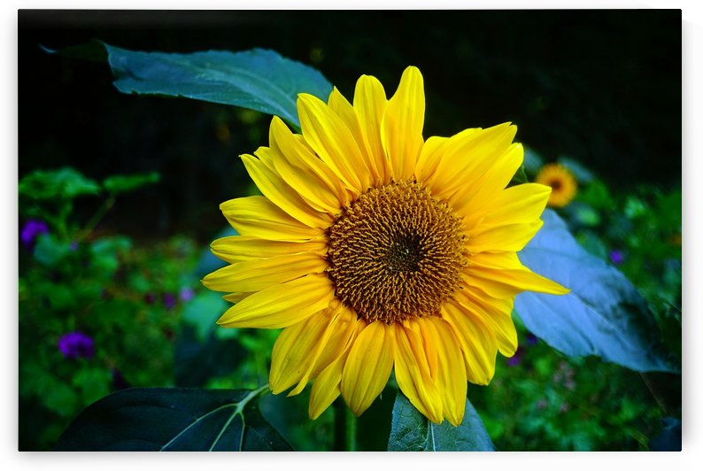 Sides of a Sunflower 07 by Richard Vloemans Macro Photography